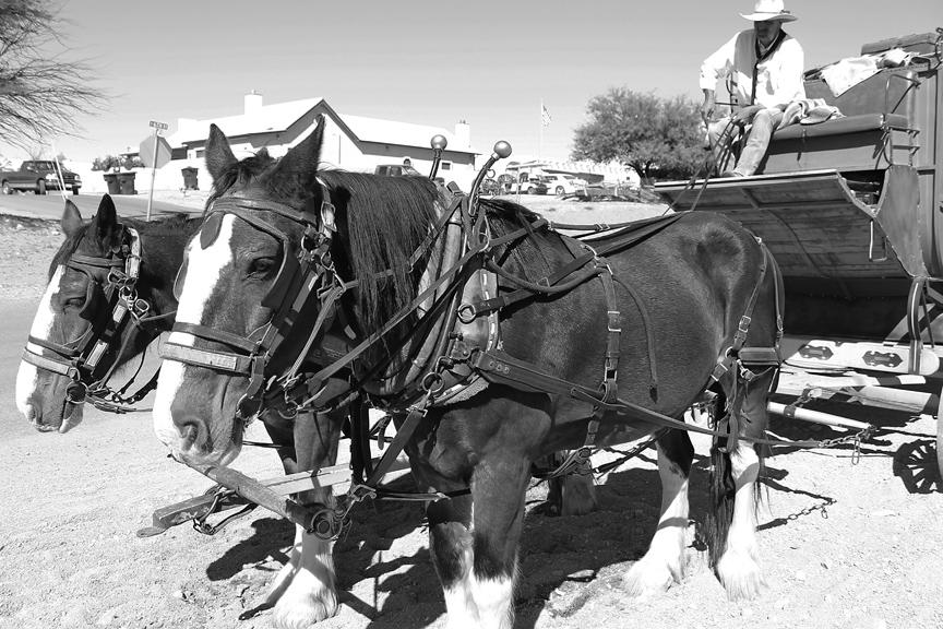 11.2.horse02.bw.ra