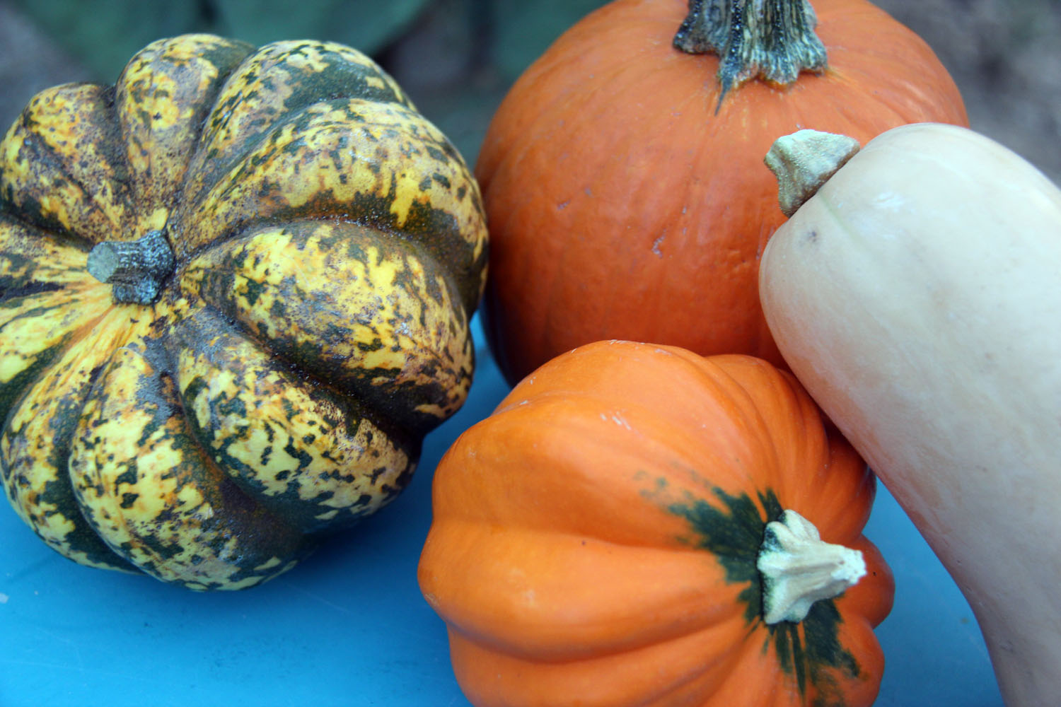 Variety of Winter Squash (Photo By: Sarah Pelfini/Arizona Sonoran News)