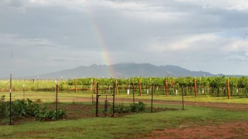 The view from one of the wineries in Southern Arizona. (Photo courtesy of Kat Crockett).