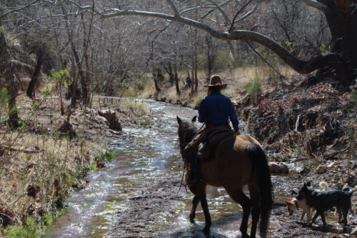 Peterson riding her horse Sis through the creek, routinely checking the cattle with her dogs right beside her. (Photo by Briannon Wilfong/El Inde).