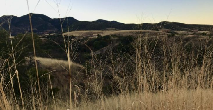 """Dry grass contributes to high fire risk in the area, which Bartine called, """"one big tinder box."""" (Photo by Sasha Hartzell/El Inde)."""
